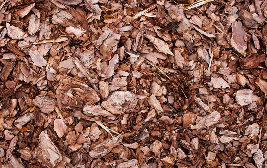 header-decorative-bark