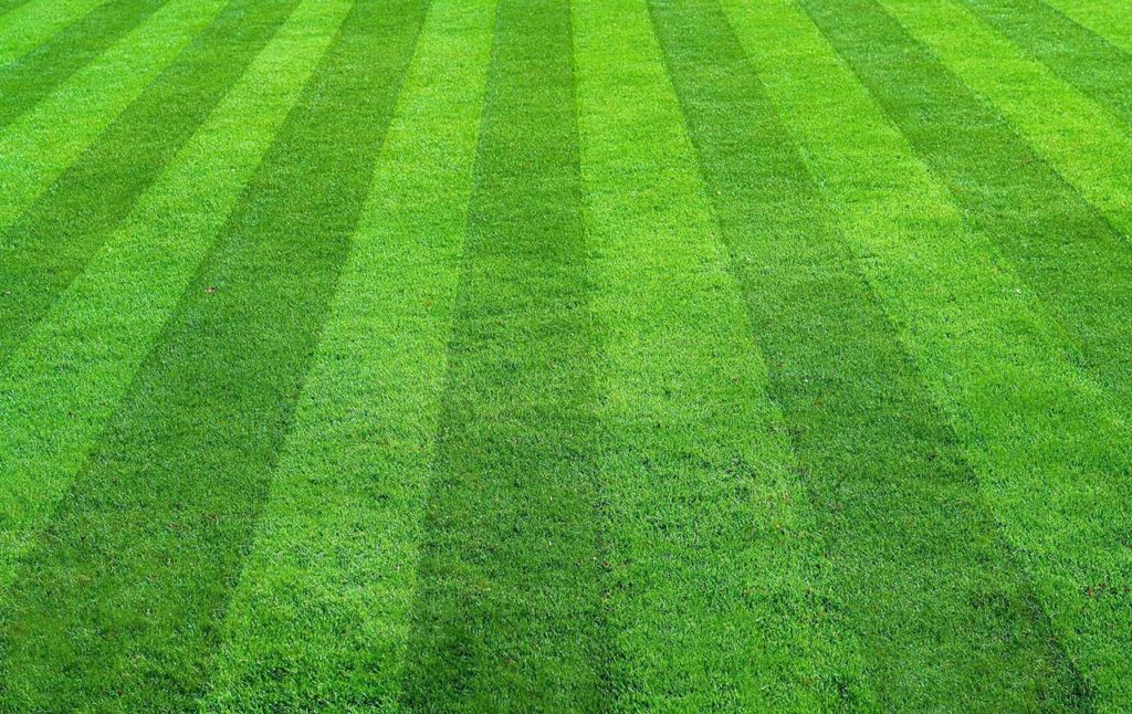 header-grass-cutting-and-mowing