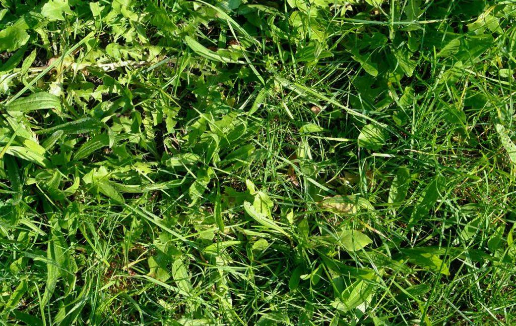 header-lawn-weed-control