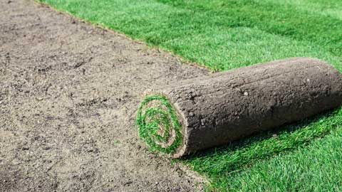 service-turfing