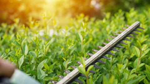 service-hedge-cutting