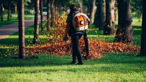service-leaf-clearance