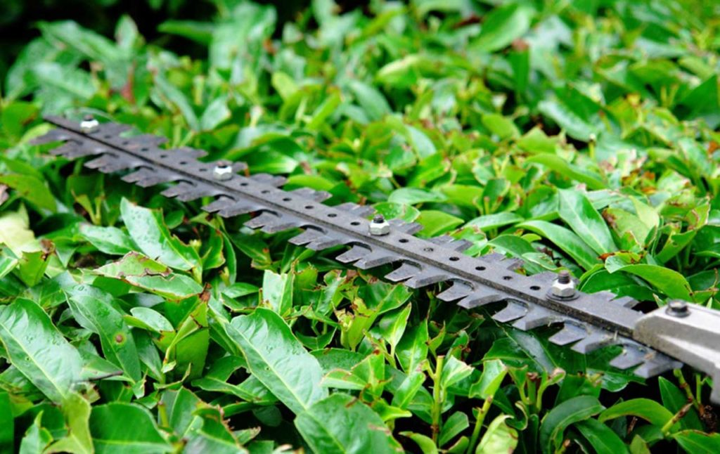 header-hedge-cutting